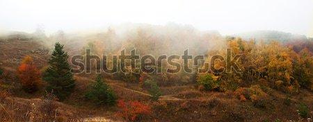 Stok fotoğraf: Sonbahar · manzara · ağaçlar · sarı · yaprakları · sis