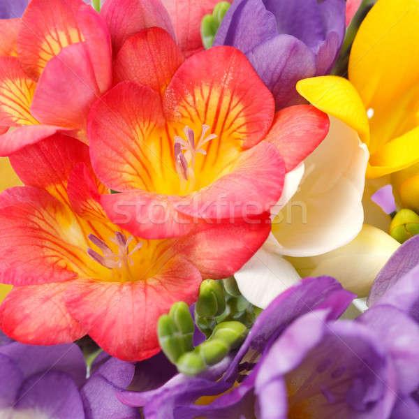 Belo flores jardim folhas vermelho romance Foto stock © All32