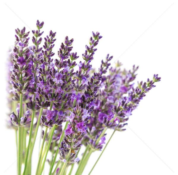Stok fotoğraf: Mor · lavanta · çiçekler · yalıtılmış · beyaz · yaz
