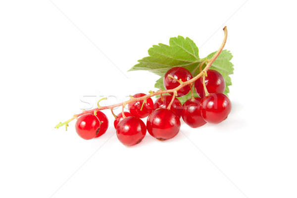 Twig of red currants with a green leaf Stock photo © All32