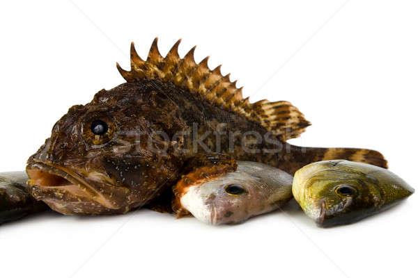 Marine fish (Scorpaena porkus, D. annularis L). Stock photo © All32