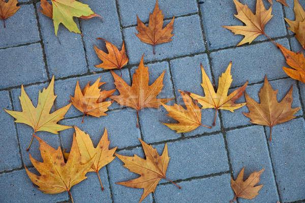 Sonbahar yaprakları sokak yaprak sonbahar renk düşmek Stok fotoğraf © All32