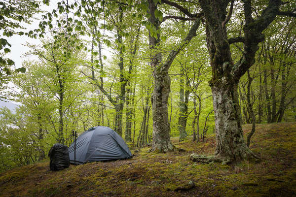 Tent in the spring forest Stock photo © All32