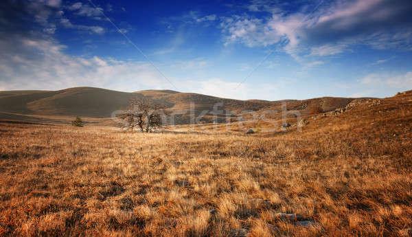 Eenzaam boom veld blauwe hemel wolken hemel Stockfoto © All32