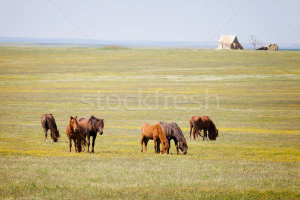 Horses in a field  Stock photo © All32