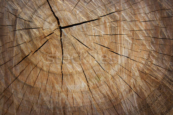 The texture of wood cut across. Stock photo © All32