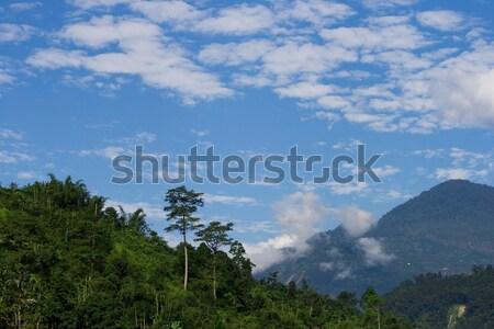 Naturalismo paisagem montanha floresta blue sky nuvens Foto stock © All32