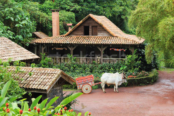 Traditional Costa Rican Home Stock photo © allihays