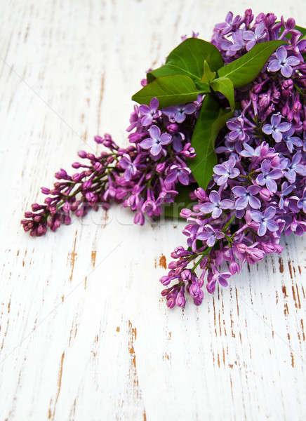 Liliowy kwiaty starych drzewo charakter Zdjęcia stock © almaje
