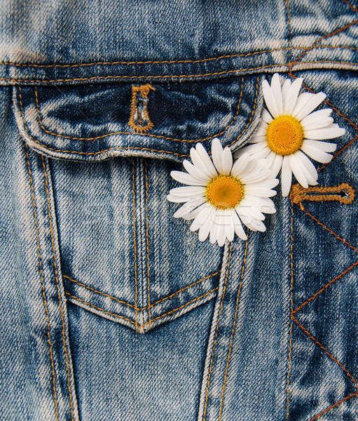 daisy in jeans pocket Stock photo © almaje
