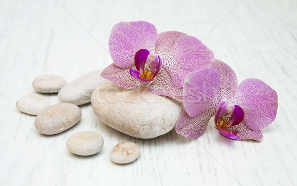 Orchids and massage stones Stock photo © almaje