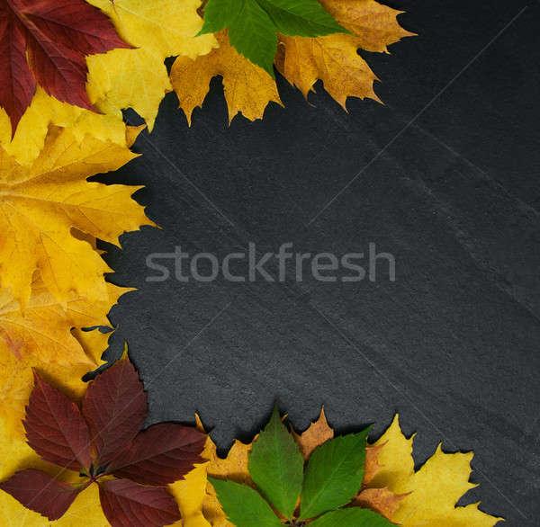 Autumn leaves on blackboard Stock photo © almaje