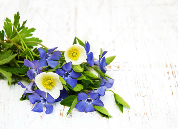 periwinkle and spring anemone Stock photo © almaje