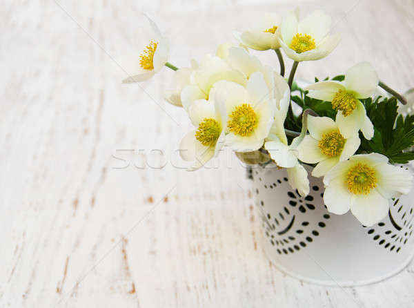 Anemone flowers Stock photo © almaje