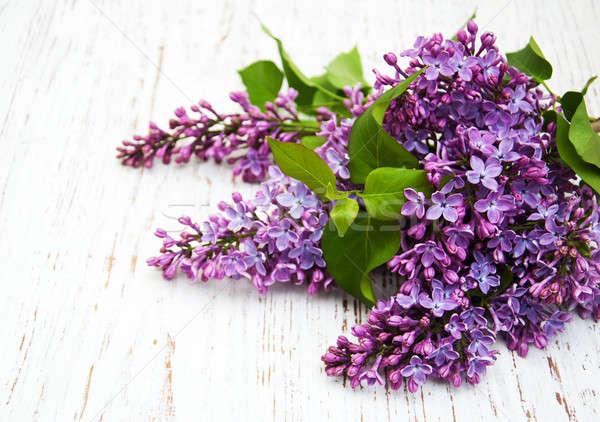 Foto stock: Lila · flores · edad · madera · naturaleza