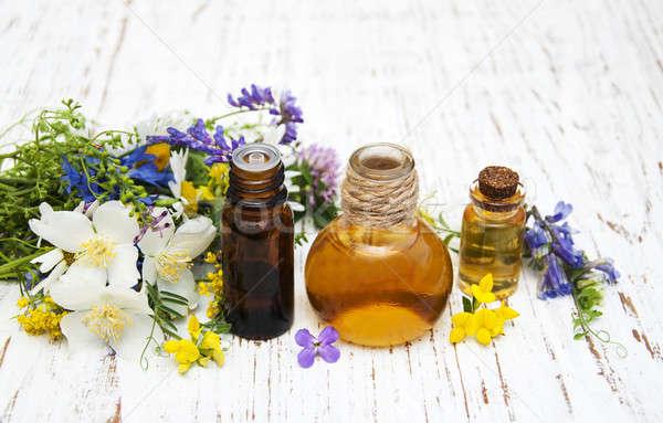 Natureza Óleo flores silvestres velho flor Foto stock © almaje