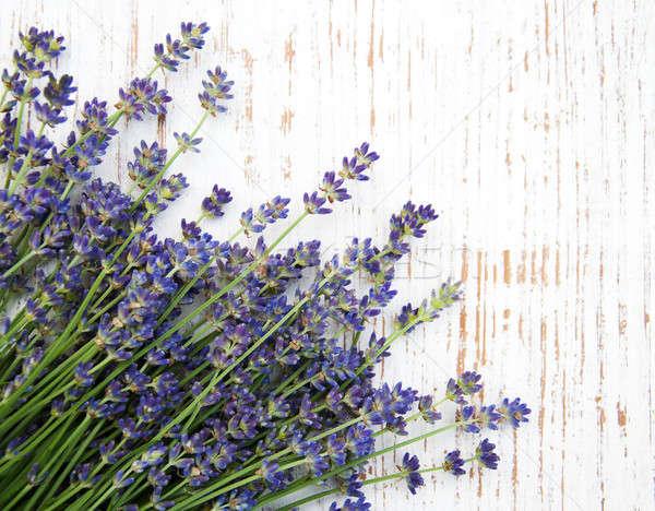 bunch of lavender Stock photo © almaje