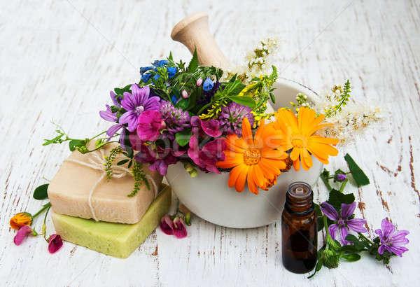 Flor silvestre hierba hoja blanco jabón saludable Foto stock © almaje