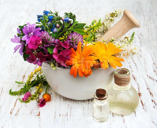 Kır çiçeği ot yaprak beyaz sabun sağlıklı Stok fotoğraf © almaje