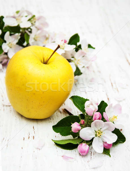 apple and apple tree blossoms Stock photo © almaje