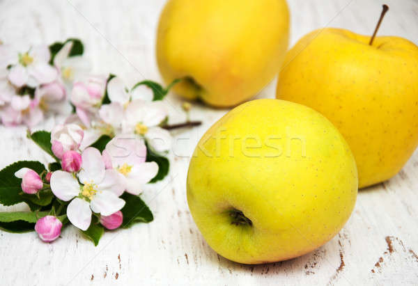 apples and apple tree blossoms Stock photo © almaje