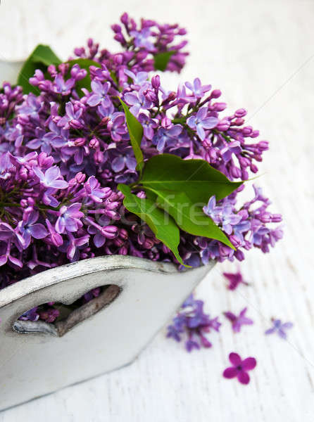 Lilac flowers Stock photo © almaje
