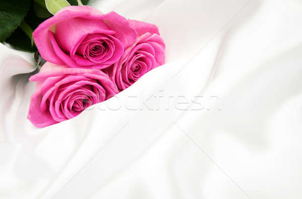 roses on white silk background Stock photo © almaje
