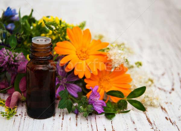 Flor silvestre petróleo naturales hierba hoja Foto stock © almaje