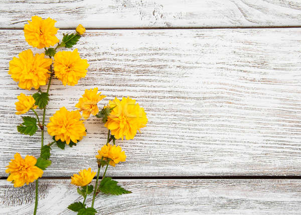 黄色の花 古い 木製 春 自然 背景 ストックフォト © almaje