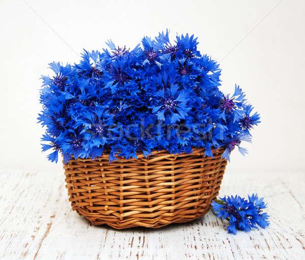 blue cornflowers Stock photo © almaje