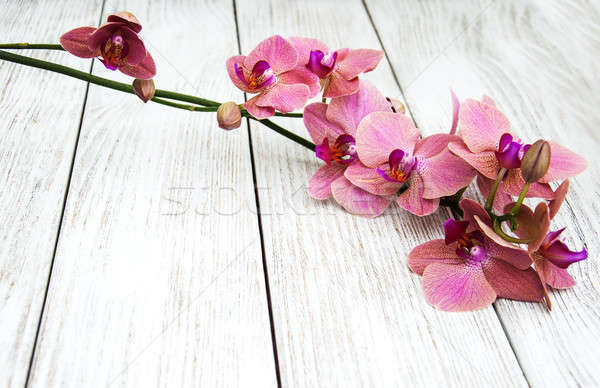 Pink orchids flowers Stock photo © almaje