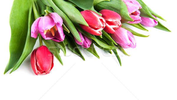 букет тюльпаны белый весны природы фон Сток-фото © almaje