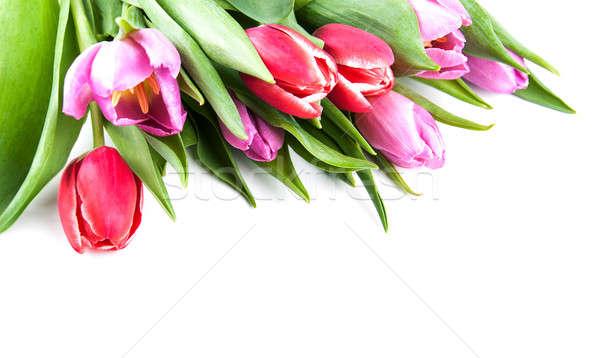 Boeket tulpen witte voorjaar natuur achtergrond Stockfoto © almaje