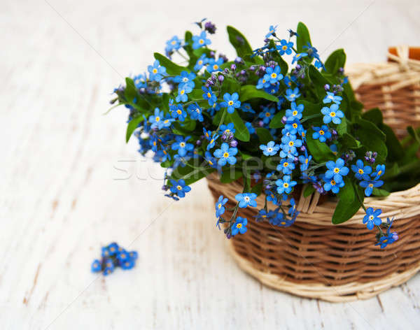 Forget me nots flowers Stock photo © almaje