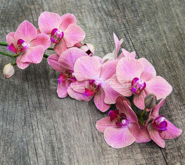 Foto stock: Rosa · orquídeas · flores · velho · primavera