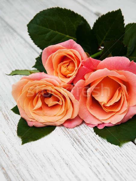 Rosa rose legno tre vecchio bianco Foto d'archivio © almaje