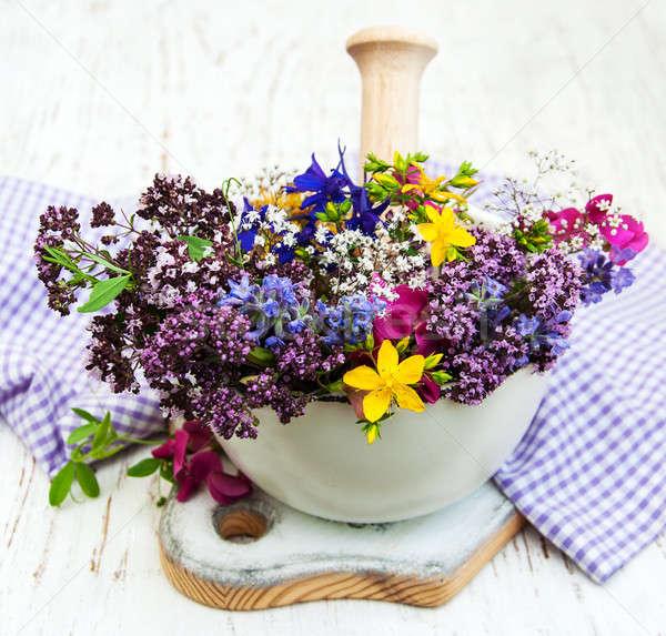 Vadvirág gyógynövény levél fa fehér egészséges Stock fotó © almaje