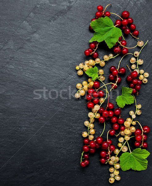 Red currant with leaves Stock photo © almaje