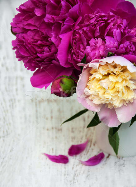 Peony in a vase Stock photo © almaje