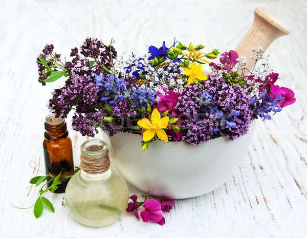 Dziki kwiat herb liści biały mydło zdrowych Zdjęcia stock © almaje