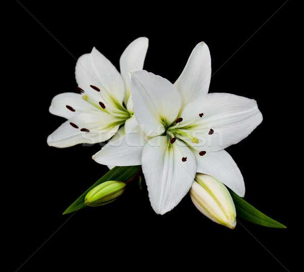 Сток-фото: белый · Лилия · изолированный · черный · цветок · красоту