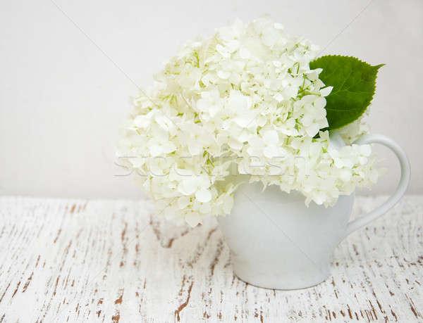 white hydrangea in a vase Stock photo © almaje