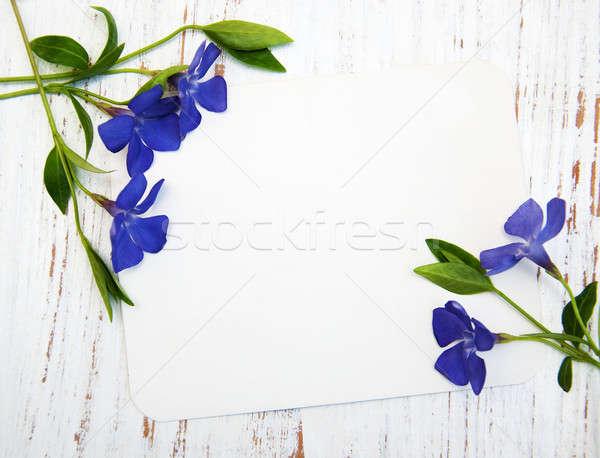 Perwinkle and card Stock photo © almaje