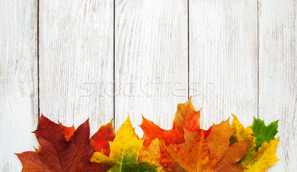 Colorful autumn leaves  Stock photo © almaje