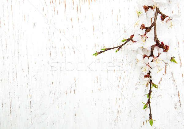 spring blossom on wood background Stock photo © almaje