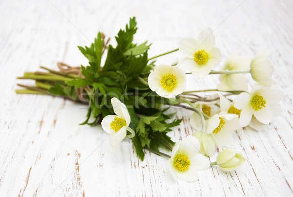 Flores primavera flor madera hoja Foto stock © almaje