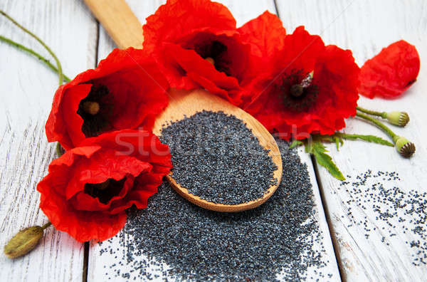 Papoula sementes flores natureza vermelho Foto stock © almaje