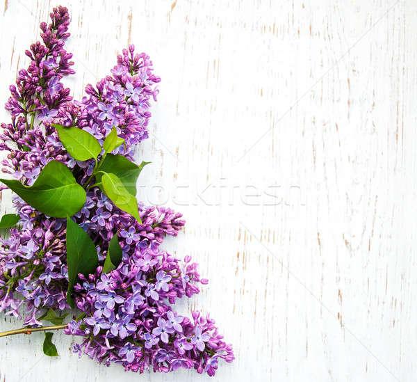 Lila flores edad árbol naturaleza Foto stock © almaje