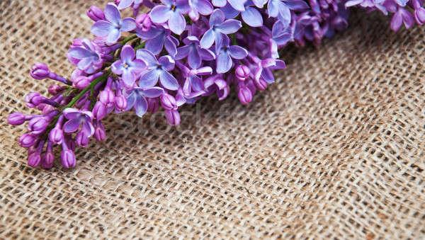 Liliowy kwiaty starych konopie drewna charakter Zdjęcia stock © almaje