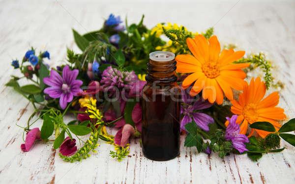 Kır çiçeği yağ doğal ot yaprak ahşap Stok fotoğraf © almaje